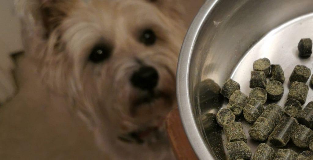 Alfie and his veggie dog food