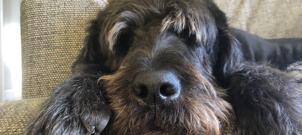 Rudi, the smelly dog