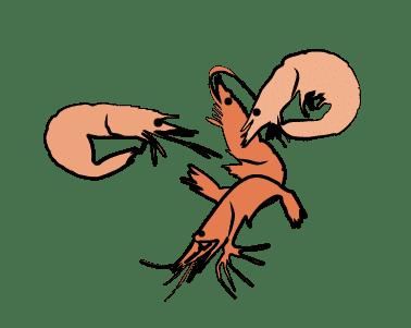 Hug Krill