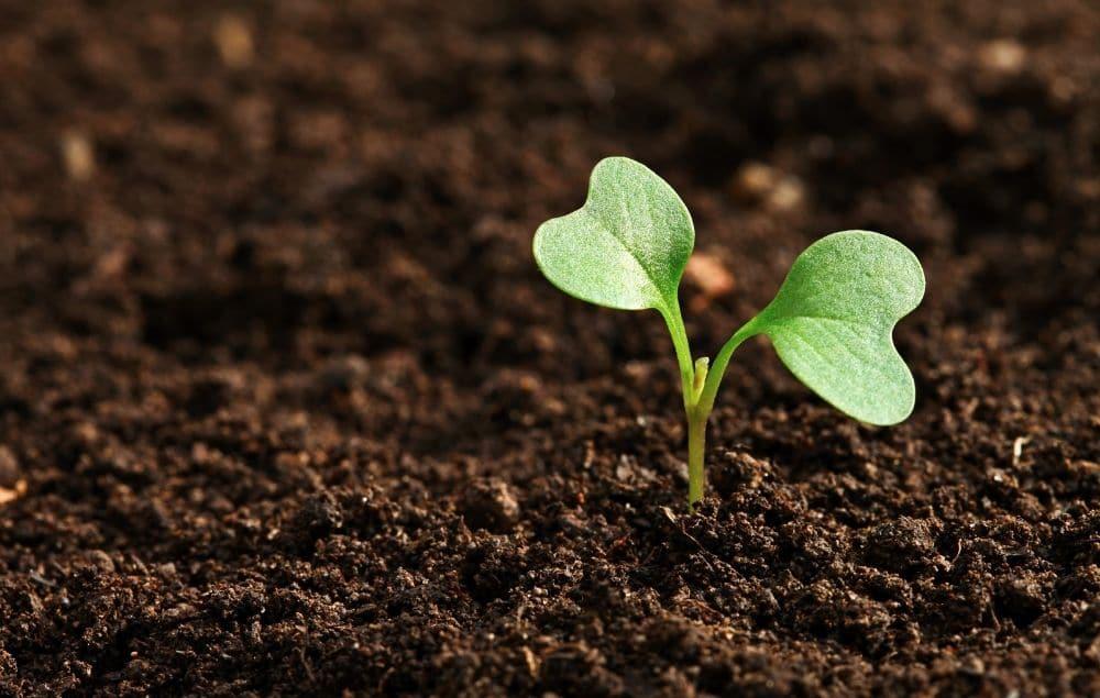 soil based ingredients