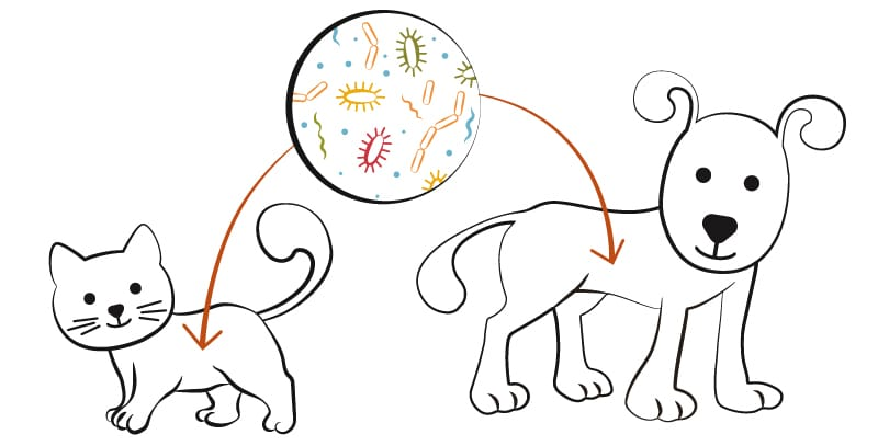 pet's microbiome diagram