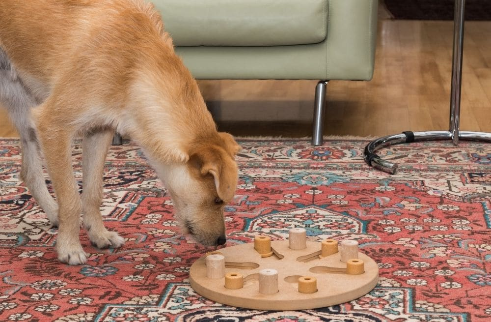A puzzle feeder for dog burps