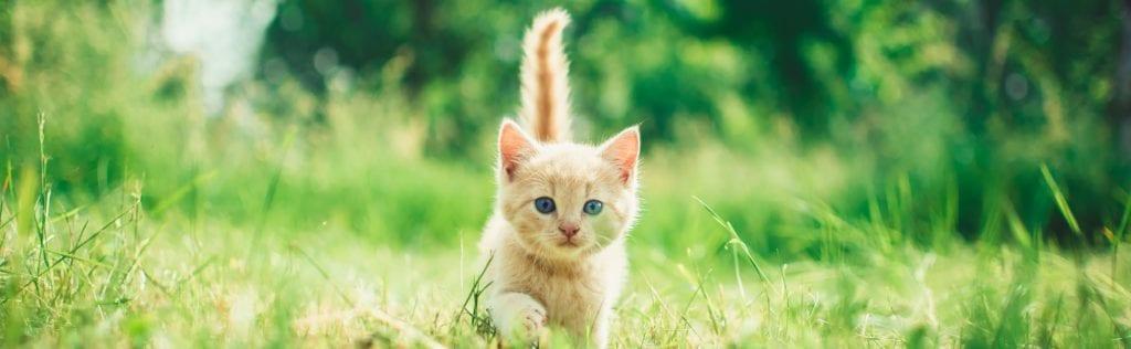 Kitten in the wild