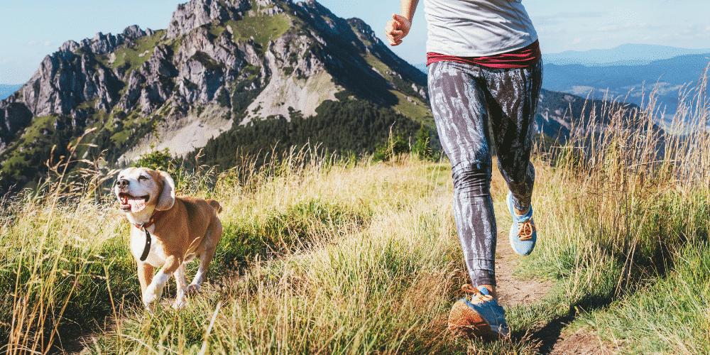sporting dog - running