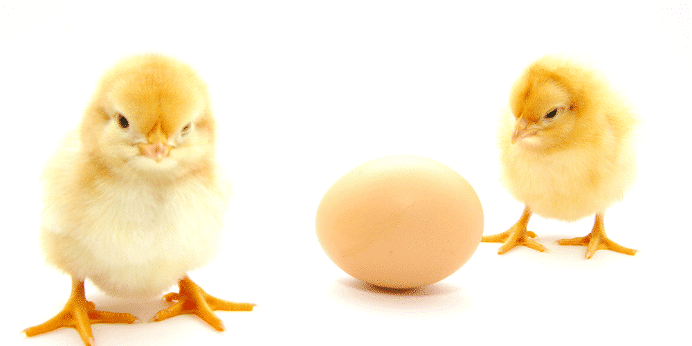 can dog eat egg if allergic to chicken