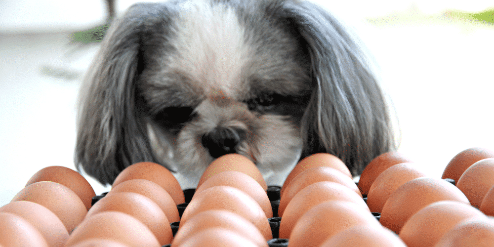 egg blog 2