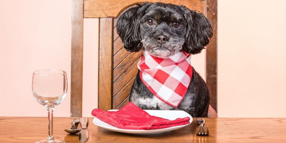 dog sat at dinner table