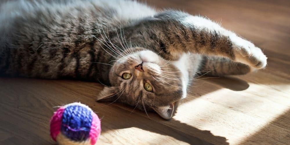 indoor cat 2